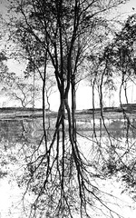 Confusion (Nafiul Hasan Nasim) Tags: bw nature canon blackwhite artistic conceptual bangladesh reflaction nasim abustract 60d nafiulhasannasim 01723313123