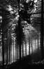 An Abomination (e27182818284) Tags: sigma1020mmf35exdchsm blackforest schwarzwald
