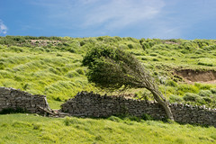 We chased our pleasures here (OR_U) Tags: 2017 oru uk england dorset jurassiccoast hill green sky wall breakthrough tree thedoors landscape hff