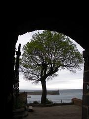 ** Collioure... la magnifique... ** - 43 (Impatience_1 ( Peu...ou moins présente... )) Tags: collioure languedocroussillonmidipyrénées pyrénéesorientales céret côtevermeille france architecture arbre tree impatience méditerranée mediterranean supershot coth saveearth coth5 abigfave sunrays5 paysage landscape