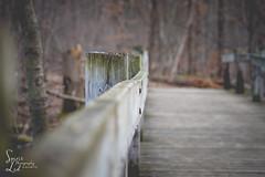 Old Bog Trail (1 of 1) (amndcook) Tags: bridge michigan outdoors tree amandacook bark fence hike insect nature photo photograph post season spiritledphotography walk winter