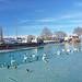Birds wait for a hand out , Lake Balaton Siofok