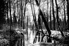 B&W Creek (-+Niels+-) Tags: bw noiretblanc blackandwhite river creek forest trees water wood sun sunlight nature leafs canon70d 7dwf