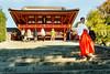 Miko (thaisa1980) Tags: 2016 hachimangū kamakura santuario shinto shintoist tsurugaokahachimangu blanco escaleras japan japanese japon japón miko monja naranja nippon nipponese orange red rojo sacerdotisa shrine sintoismo sintoista stairs white