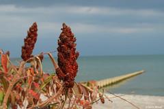 Lake Erie Fall (Digital Aviary) Tags: fall flowersplants groin lakeerie