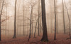 Faded (Netsrak (on/off)) Tags: forst landschaft natur nebel wald fog forest mist nature woods rheinbach nordrheinwestfalen deutschland de eifel