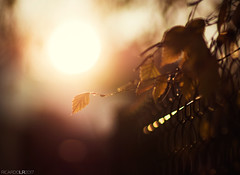 Looking forward (Photographordie) Tags: samyangasphericalif85mmf14 olympuspenepm2 85mm samyang85mm rokinon85mm sunset fence light glare flare glow atardecer luz bokeh dof olympus microfourthirds microcuatrotercios orange leaf winter autumn melancholy 2017 future bright life epm2