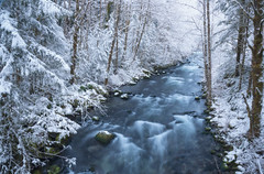 Zigzag River (JustinPoe) Tags: mt hood national forest oregon winter snow river zigzag cold white water stream trees rapids ice