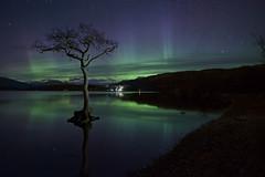 Milarrochy Aurora (Douglas Collinson) Tags: bay lochlomond benlomond balmaha luss nationalpark scotland aurora lights northern tree lightpaint nikond800 1635 night sky stars water reflection green milarochy