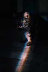 Cat Pics | Rainbow Westley (createdbyerica) Tags: cat cats kittens fluffy cute baby babes love animals soft macro lady