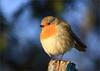 Faits d'hiver (berthou.patrick) Tags: faits dhiver