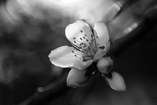 Un printemps monochrome
