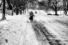 blizzard of 2016 (Thrift Store Camera) Tags: philadelphia street photographer photo journal city line snow storm blizzardof2016