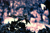 The storm (* landscape photographer *) Tags: italy macro nature colors europe flickr valle natura valley sa nikkor acqua pioggia temporale tempesta lucania 2015 thecalmafterthestorm nikond90 landscapephotographer sinni montalbanojonico salvyitaly francavillainsinni