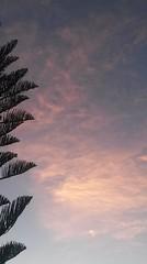 Alba (Orgo Solo) Tags: sky foglie alba rosa cielo sicily sicilia mattino bonagia