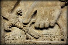 Apkallu's hand holding a bucket (Assyria, Babylon, Akkad, Sumer...) Tags: bucket spirit iraq relief bracelet sword turban protective britishmuseum bas mesopotamia bowel alabaster sheath polos ashurnasirpal nimrud kalhu armlet apkallu royalthrone headdess calah banduddu