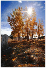 Cemetery Autumn (ctofcsco) Tags: 1160 16mm 1635mm 220 aspens autumn canon colorado coloradosprings ef1635mm eos1dsmarkii explore fall graves mtpisgahcemetery sunflare ultrawideangle unitedstates usa wideangle cripplecreek geo:lat=3874886452 geo:lon=10519427941 geotagged landscape tellercounty tree plant leaf leaves yellow orange aspen trees best wonderful perfect fabulous great photo pic picture image photograph esplora explored ultra wide angle