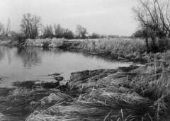 Winter time (Other dreams) Tags: water monochrome silver landscape polish vistula oxbow pomerania gelatin baryta