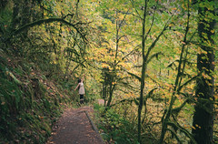 Picking Autumn Leaves (dstebbins) Tags: park autumn color wet girl leaves oregon forest silver moss maple woods nikon floating levitation falls trail pnw d7000