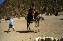 Ägypten 1983 (31) Gizeh: Cheopspyramide (Rüdiger Stehn) Tags: afrika archäologie pyramiden cheopspyramide giseh gise giza aldschīza alǧīza ilgīza ägypten egypt nordafrika nordägypten bauwerk sakralbau historischesbauwerk 1983 sommer urlaub dia minoltasrt100x analogfilm scan slide 1980er 1980s diapositivfilm analog kleinbild kbfilm 35mm canoscan8800f archäologischefundstätte unescowelterbe unescoweltkulturerbe altägypten ancientegypt menschen tier kamel leute misr unterägypten addiltā welterbe weltkulturerbe ägyptologie reise reisefoto rüdigerstehn