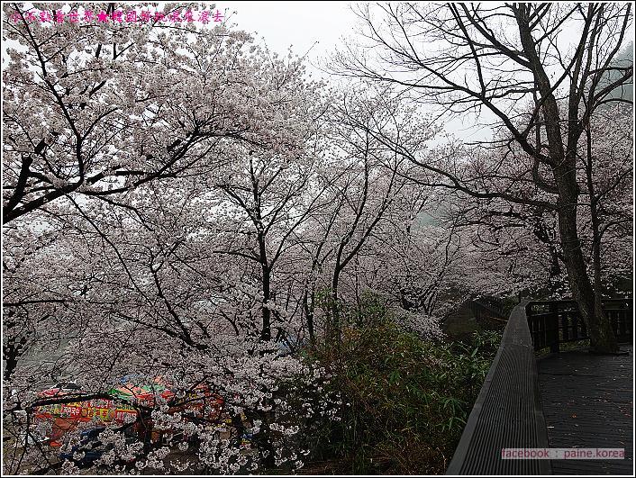 河東花開十里路 (45).JPG