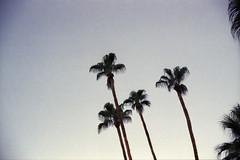 amerika (finnegan_eins) Tags: voigtländerbessar3a 40mm14 fujisuperia200 usa palmsprings