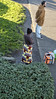 7286 Sienna Brow Calbled Cardigan and Ethnic Tree of Life Ethnic Maxi (eyepiphany) Tags: streetphotography portlandoregon siennabrowncabledcardiganandethnictreeoflifemaxiskirt ethinicfashion busstoptableau treeoflife winterfashion portlandfashion