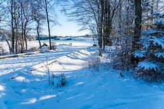 Landscape (torlind54) Tags: haugesund 2016 tormod lindøe djupadalen rogaland winter snow sky blue trail landscape forest trees water
