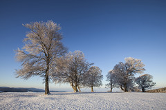 same procedure as every year (crazyhorse_mk) Tags: windbeeches schauinsland stohren giesshuebel schwarzwald blackforest baden badenwuerttemberg germany landscape nature tree mountain summit morning sun sunrise sky snow winter