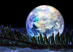 Frosted Wonder (Don Komarechka) Tags: winter macro freezing frost ice crystal bubble colour science birefringence