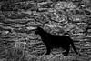 Il_colore_dell'ombra (Danilo Mazzanti) Tags: danilo danilomazzanti mazzanti wwwdanilomazzantiit fotografia foto fotografo photos photography biancoenero blackandwhite gatto gattonero muro composizione