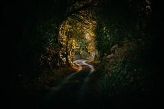 Lane (Future-Echoes) Tags: 2011 autumn essex lane light road shadow wickhambishops winding tamronsp90mmf2811macro tamron