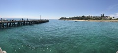 Portsea (Thunder1203) Tags: portsea morningtonpeninsula thesea sescape ios10 mobilephone victoria bay niceweather