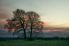 billinge sunset (g a millington) Tags: billinge garswood sunset bluehour skies clouds cloudscape dusk duskskies twintrees trees lane path track
