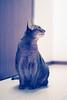 Happy new year everyone! (DizzieMizzieLizzie) Tags: film 35mm nikonf75 nikkor afs8518g fujicolorsuperia1600 abyssinian aby beautiful wonderful lizzie dizziemizzielizzie portrait cat chats feline gato gatto katt katze katzen kot meow mirrorless pisica