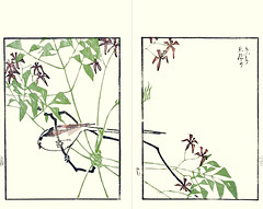 Chinaberry and long-tailed tit (Japanese Flower and Bird Art) Tags: flower chinaberry melia azedarach meliaceae bird longtailed tit aegithalos caudatus aegithalidae suiseki sato maruyama shijo woodblock picture book japan japanese art readercollection