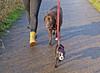 Kim - Julie 4 (Josef17) Tags: bostonterrier hund labrador feldweg ausflug
