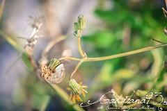 Macro test (Gaditana93) Tags: macro test caracol flora cadiz san fernando isladeleon canon canon400d gaditana93 maríadelcarmendelgadomaline green