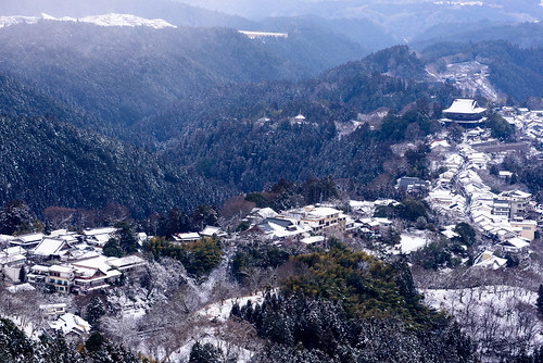 吉野6・Yoshino