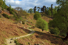 Lakeland Track (Benjamin Driver) Tags: landscape landscapes lee summer 2016 colour colours color vibrant warm walking quiet scape england eos60d eos raw green orange trees tree lakedistrict lake ullswater