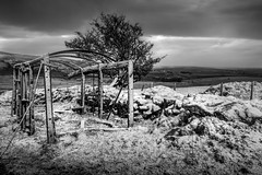 Winter On The Hills (garethleethomas) Tags: snow weather hills mountain season tree nature landscape canaon wales uk pembrokeshire outdoor