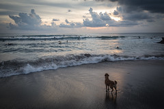 Dog Watching Surfers at Canggu Beach (pictcorrect) Tags: bali island echo beach canggu surfers surfing sunset wide angle