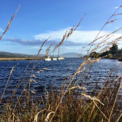Boats moored on the Huon River. Franklin, Tasmania
