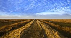 Endlessness... (Jan Wedema) Tags: jeeeweee photographer landscape pro pentax noordpolderzijl waddensea waddengebied kwelder grasland kleuren groningen ergaatnietsbovengroningen mooigrunn jan wedema janwedema