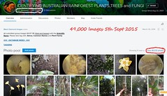 49,000 Images, 5th September 2015 - IDENTIFYING AUSTRALIAN RAINFOREST PLANTS,TREES and FUNGI Flickr Group (Black Diamond Images) Tags: screenshot rainforest 2015 rainforests australianflora australiannativeplants 49000 australianplants rainforestflora rainforestplants rainforestplant australianrainforest arfp australianrainforests australianrainforestplants identifyingaustralianrainforestplants idrainforestgroupmilestones australianrainforestflora arfmilestone 592015 treesandfungigroup idrainforestgroup rainforestidentification 49000images 49000thimage