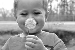 Make a Wish (snickoel) Tags: park people blackandwhite bw monochrome outside kid nikon child bokeh dandelion makeawish whiteblack d3100