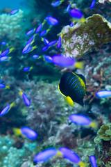 20150830-DSC_1104-3.jpg (d3_plus) Tags: sea sky fish beach japan scenery underwater diving snorkeling  shizuoka    apnea izu j4  waterproofcase    skindiving minamiizu       nikon1 hirizo  1030mm  nakagi 1  nikon1j4 1nikkorvr1030mmf3556pdzoom beachhirizo misakafishingport  1030mmpd nikonwpn3 wpn3