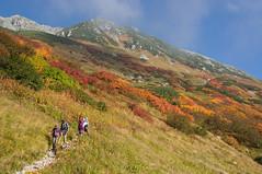 Mt.Oyama (bamboo_sasa) Tags: autumn camp mountain alps leaves japan route alpine 日本 toyama 紅葉 秋 山 kurobe tateyama hokuriku 登山 北陸 キャンプ 北アルプス 立山 富山 室堂 黒部 アルペンルート murodou 雷鳥沢 raichozawa
