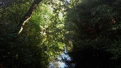 The Light Upon the Trees 6 (Peter ( phonepics only) Eijkman) Tags: holland haarlem netherlands nederland heemstede noordholland nederlandse