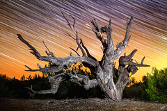 Sands of Time (TySkiPhoto) Tags: longexposure nightphotography arizona tree nature night canon dark stars outside photography us unitedstates desert space az astro galaxy nebula astrophotography oldtree nightsky universe cosmos startrails darksky lightpollution milkyway santan startrail 2015 skyglow longexpo santanmountains getoutside canon6d
